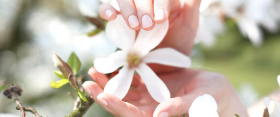 Female hands on a background of white magnolia flowers